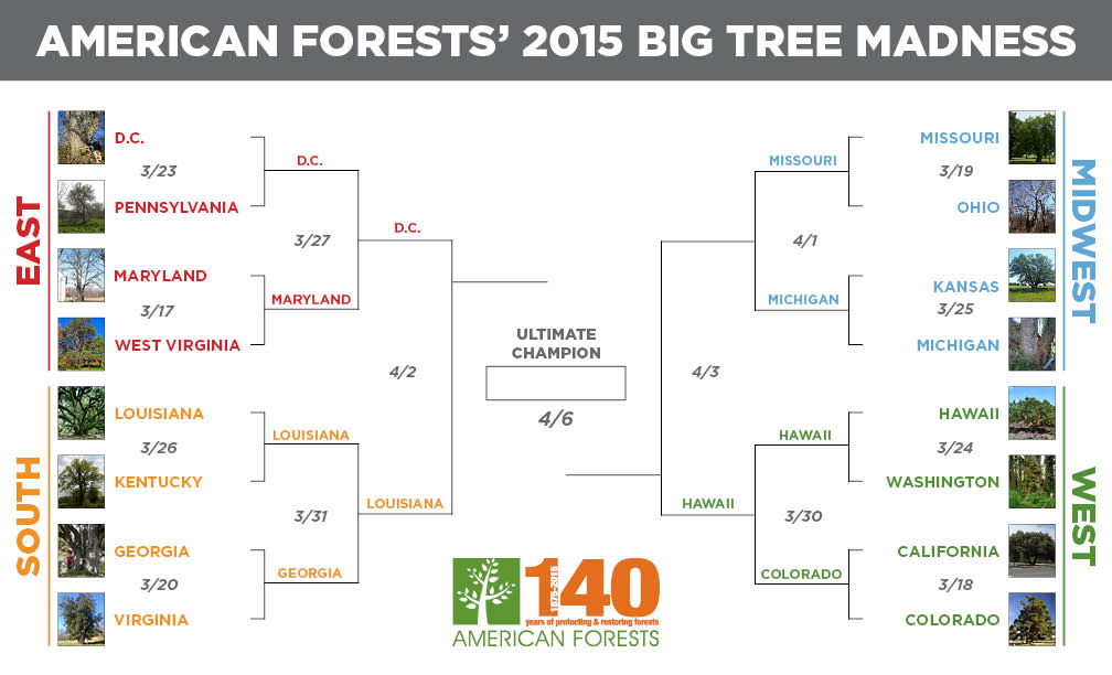 2015 Big Tree Madness Bracket