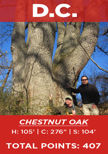 D.C. - chestnut oak