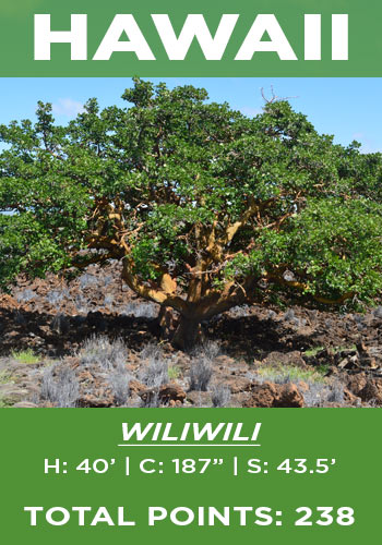 Hawaii - Wiliwili