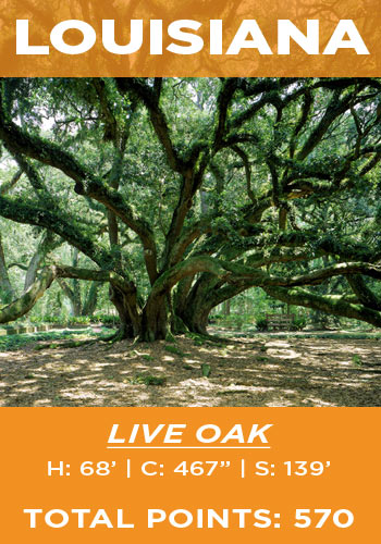 Louisiana - live oak