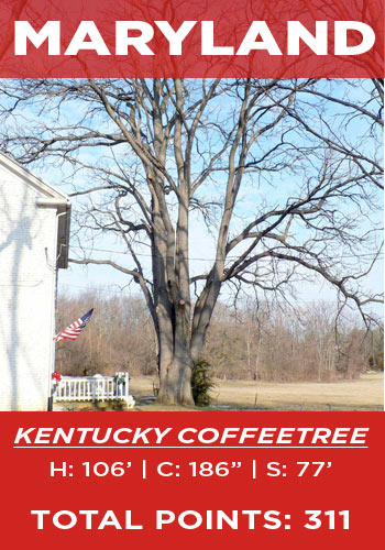 Maryland - Kentucky coffeetree