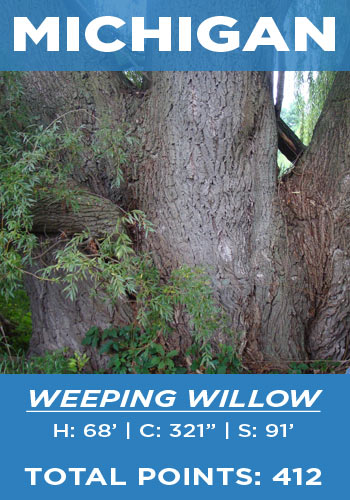 Michigan - weeping willow