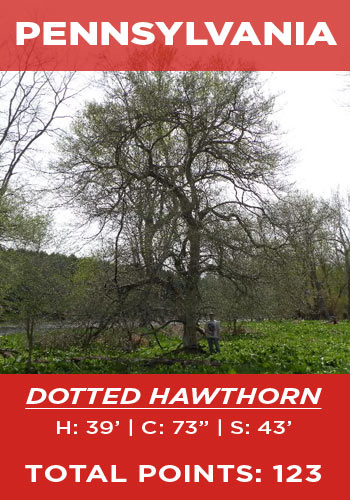 Pennsylvania - Dotted hawthorn