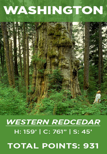 Washington - Western redcedar