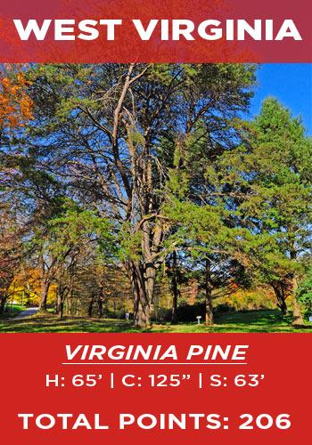 West Virginia - Virginia pine