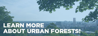 Learn more about urban forests