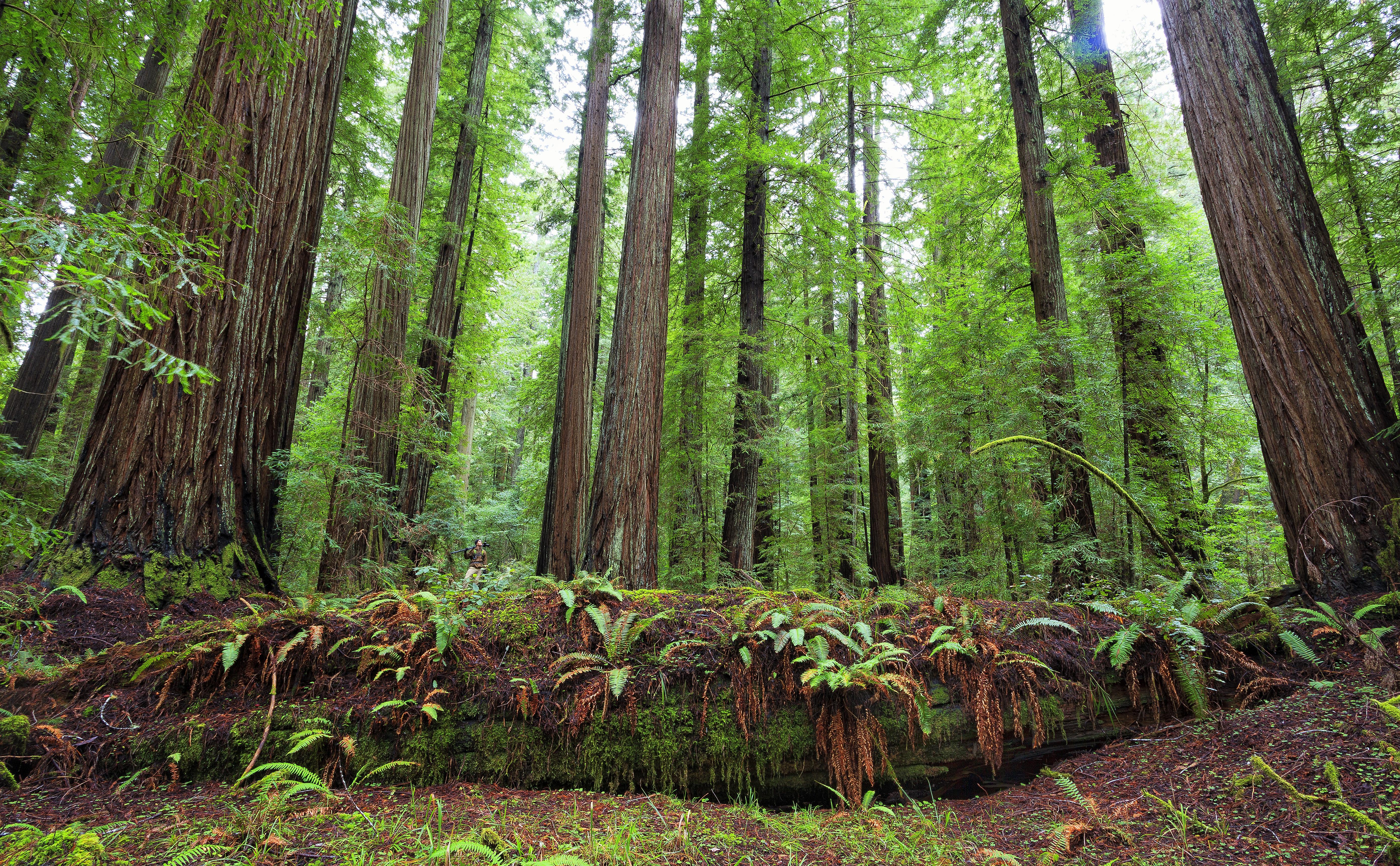 2015 trees please photo contest winners