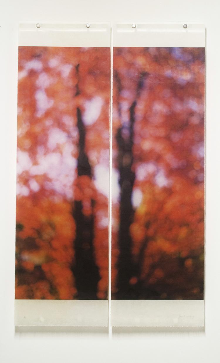 Sugar Maple (Red) by Jeri Eisenberg