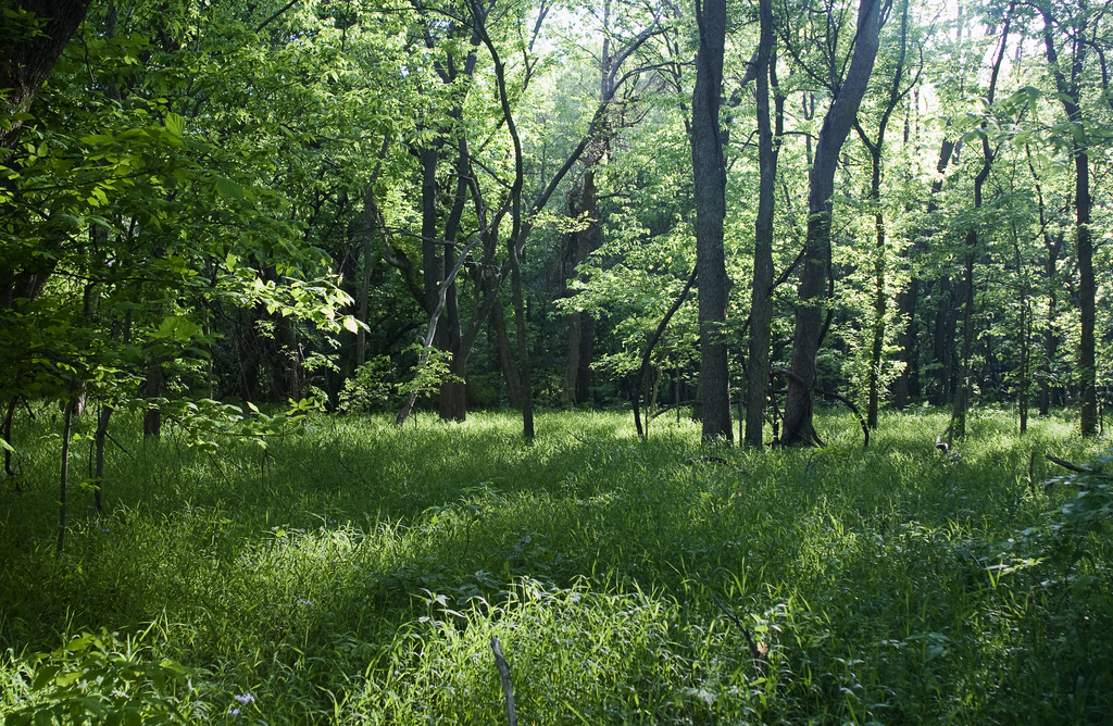 Forested land in Bartlesville, Oklahoma