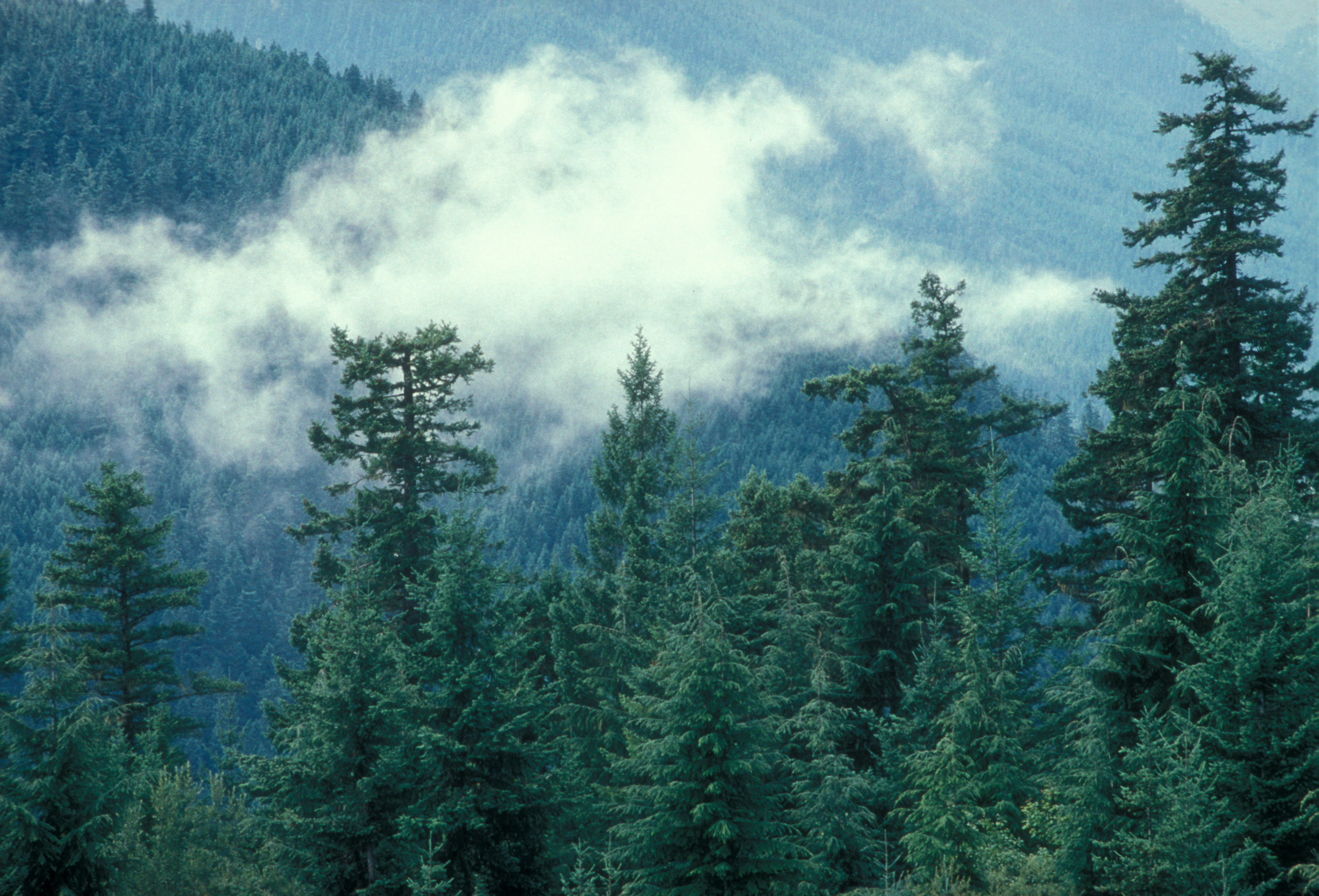 Dungeness Watershed in Olympic National Forest
