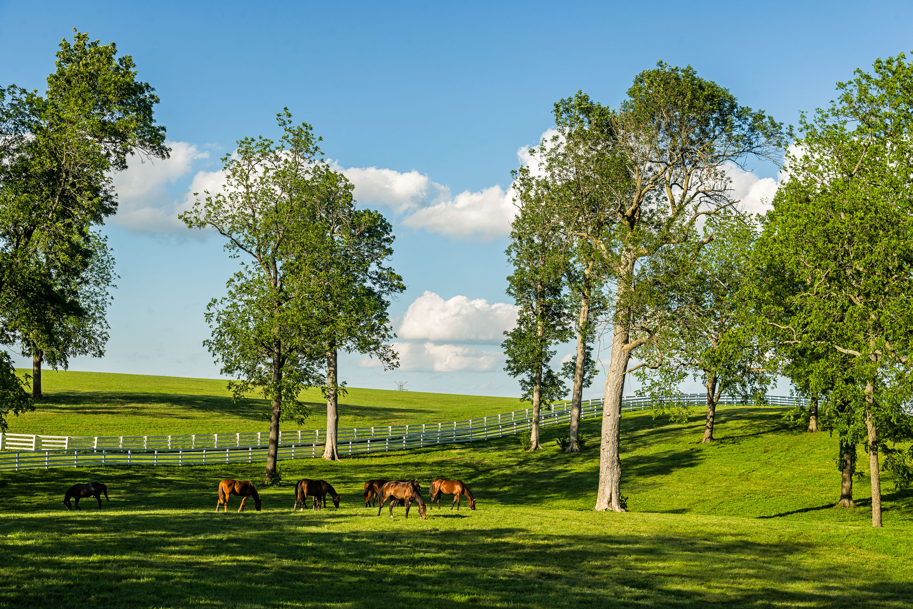 Woodland pasture on a horse farm, Fayette County, KY