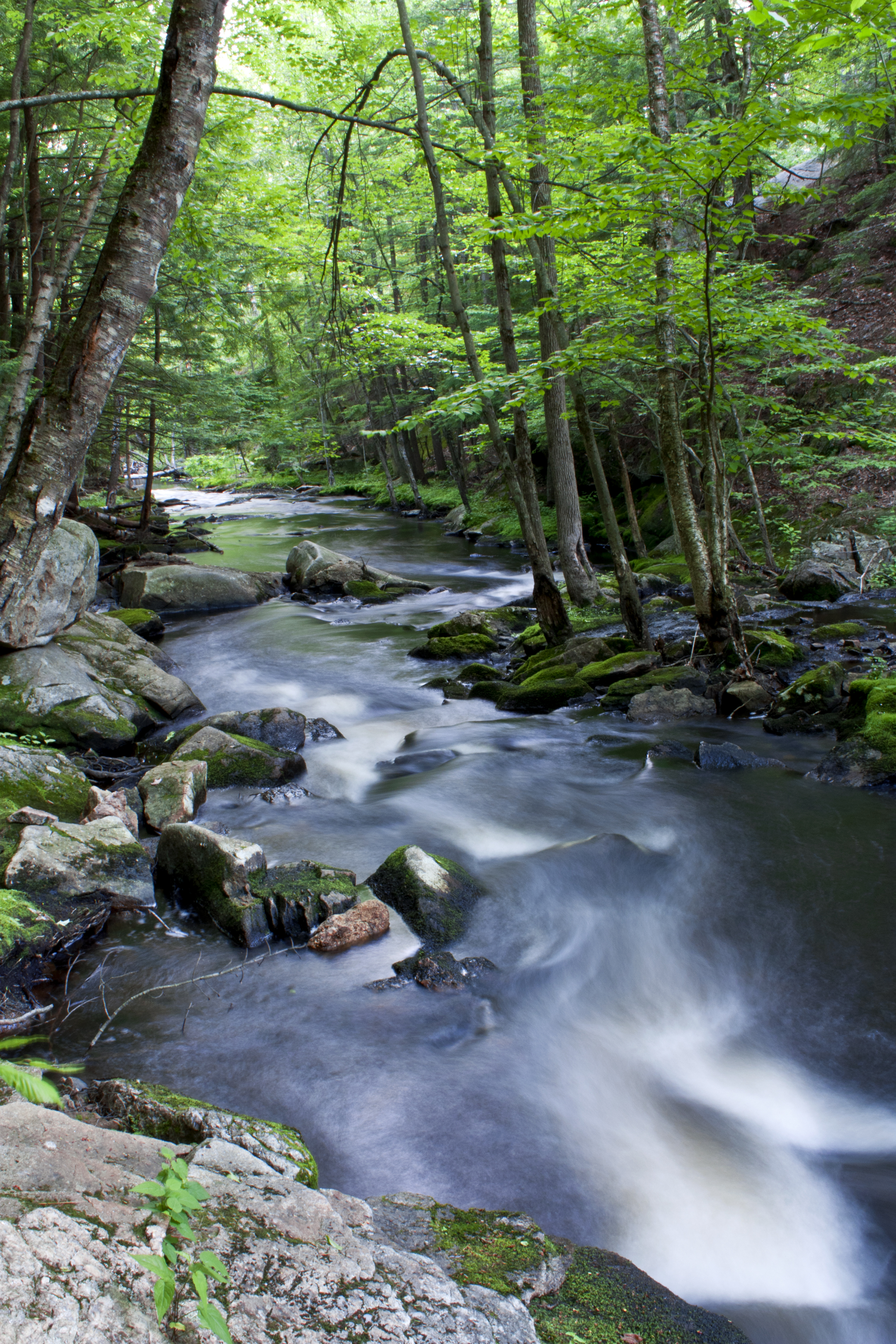 Creek in forest.