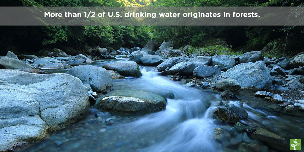 More than 1/2 of U.S. drinking water originates in forests.