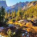 Events-Rocky Mountain National Park-quaking aspen