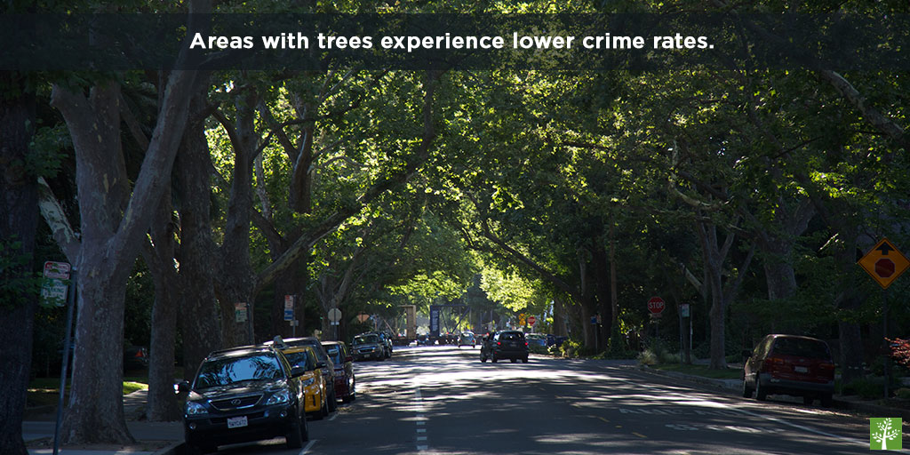 Areas with trees experience lower crime rates.
