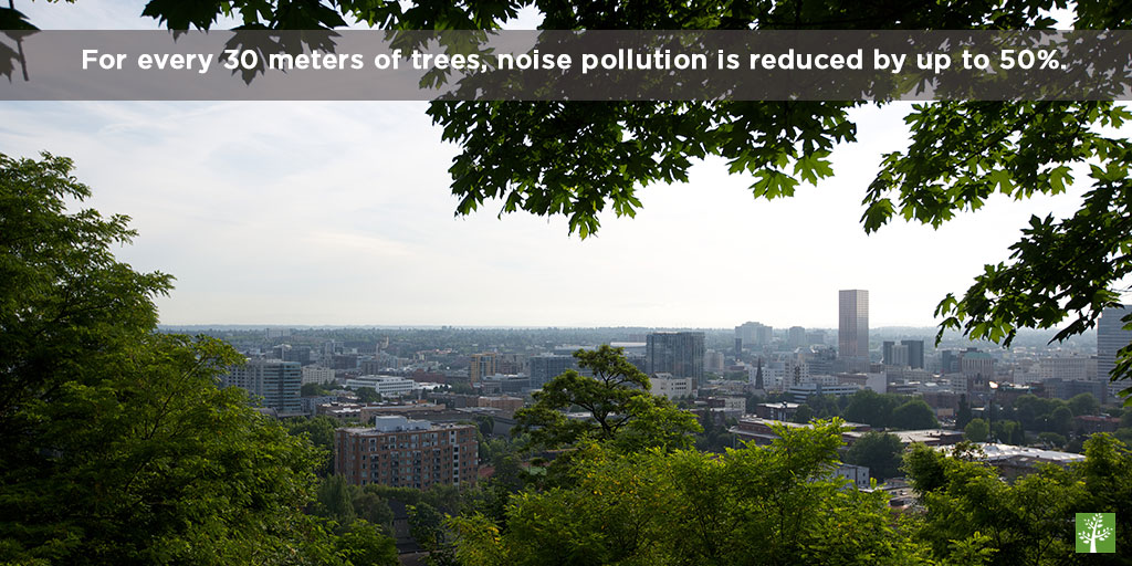 For every 30 meters of trees, noise is reduced by up to 50 percent.
