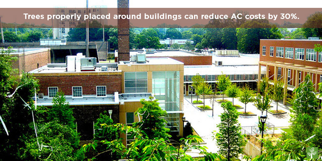 Trees properly placed around buildings can reduce AC costs by 30%