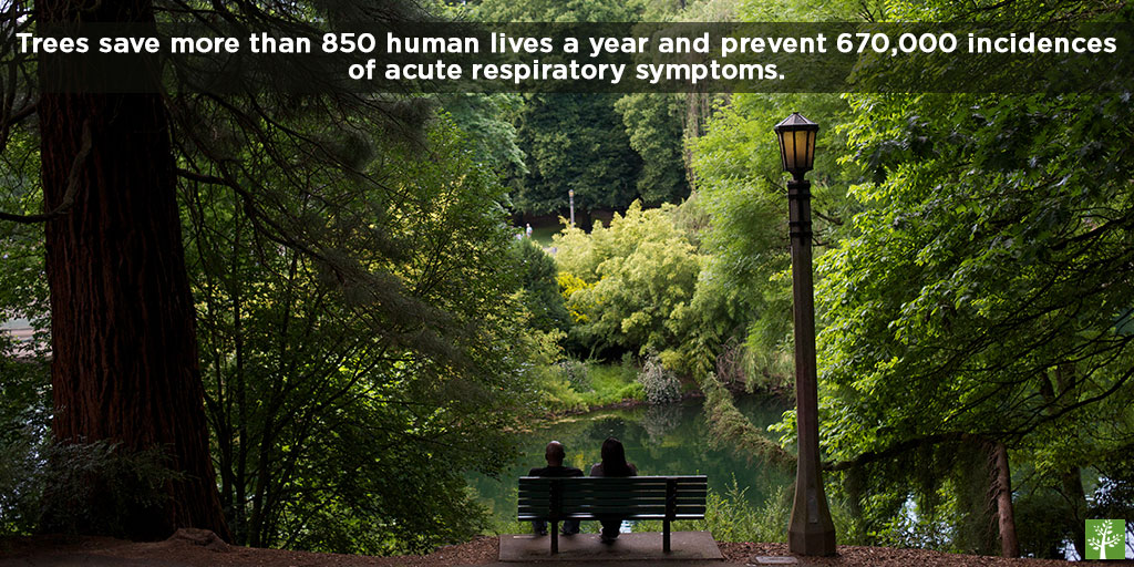 Trees save more than 850 human lives a year and prevent 670,000 incidences of acute respiratory symptoms.