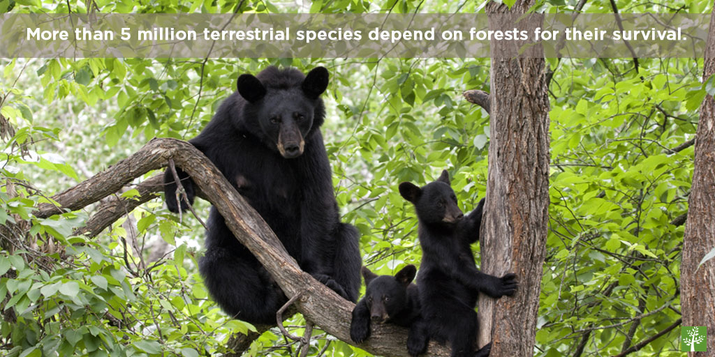 More than 5 million terrestrial species depend on forests for their survival.