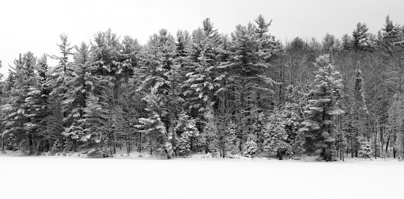 Trees with heavy snow