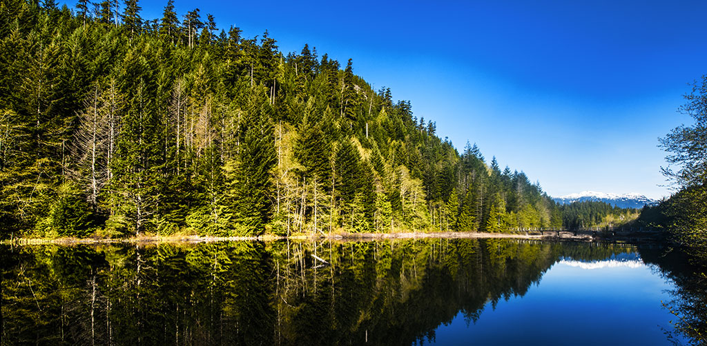 Forest on Lake