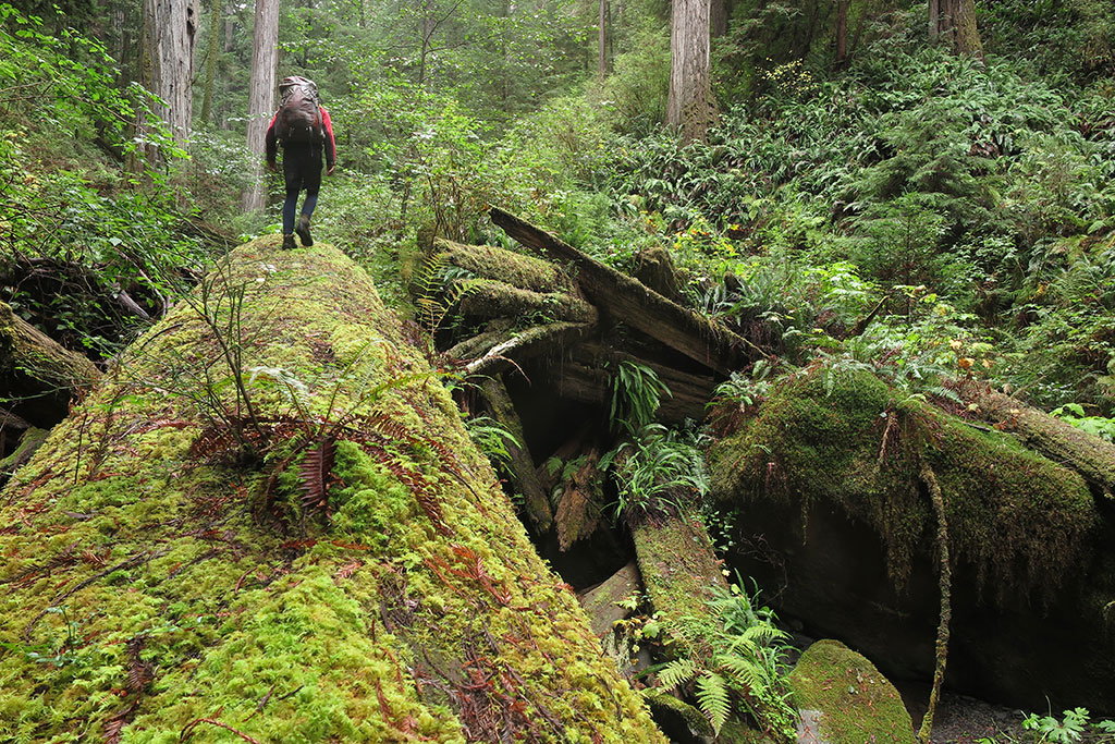 Tyler Williams hiking Little Lost Man Creek