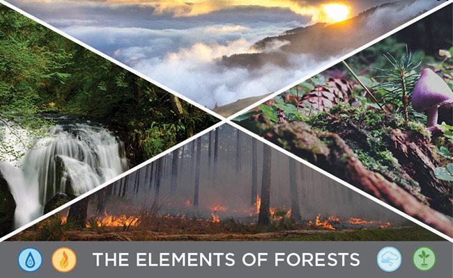 Elements of Forests