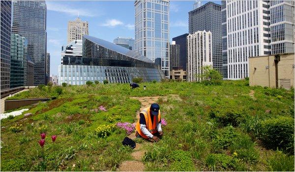 Techo Ayuntamiento Chicago Verde