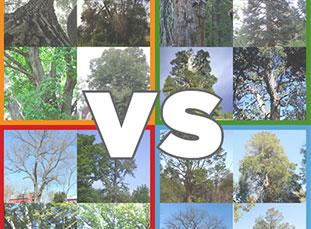 Big Tree Madness