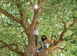 Kids climbing tree