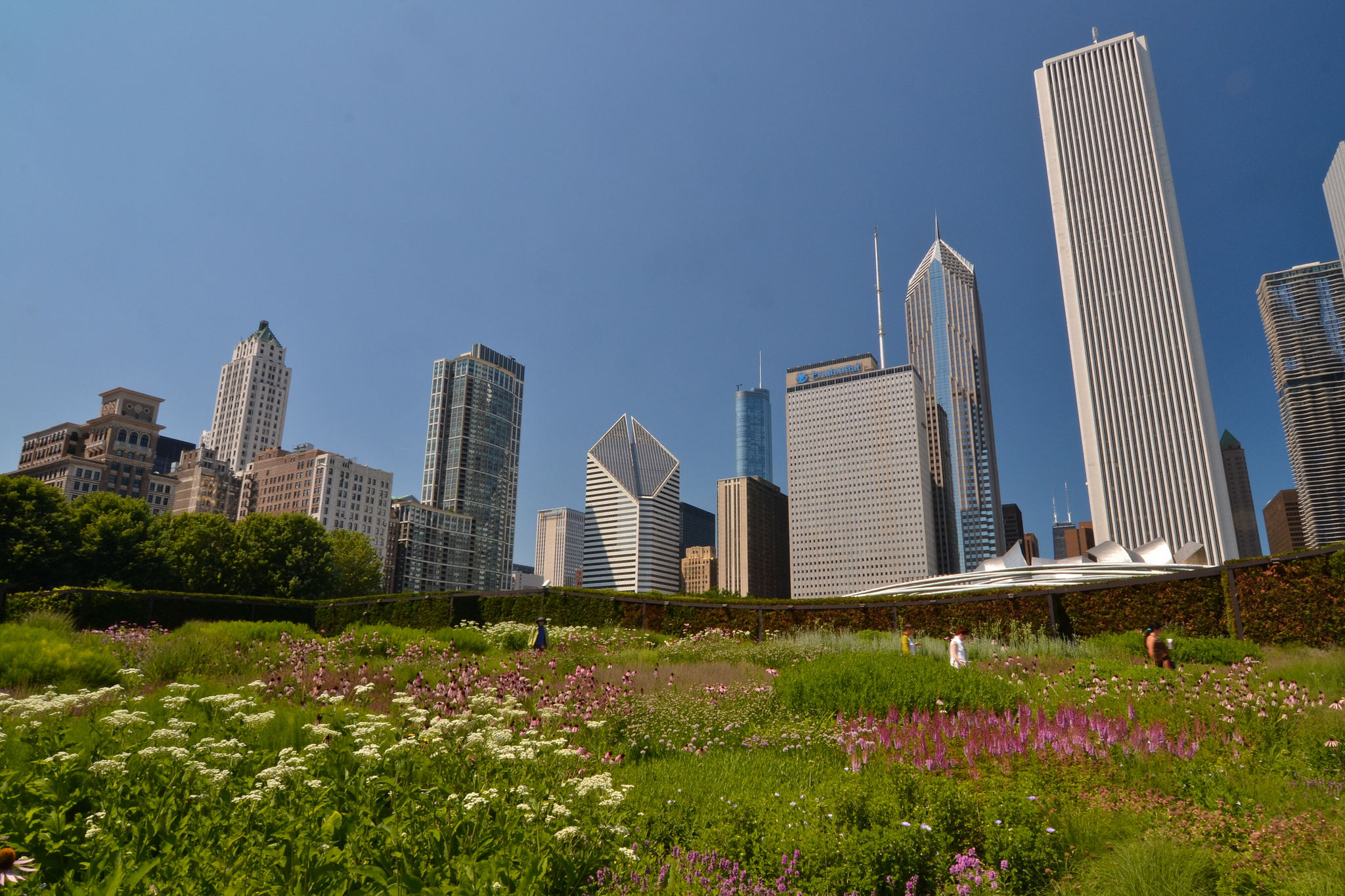 Lurie Garden at Millennium Park in Chicago