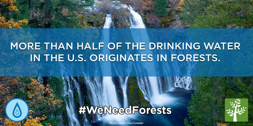 forest fact