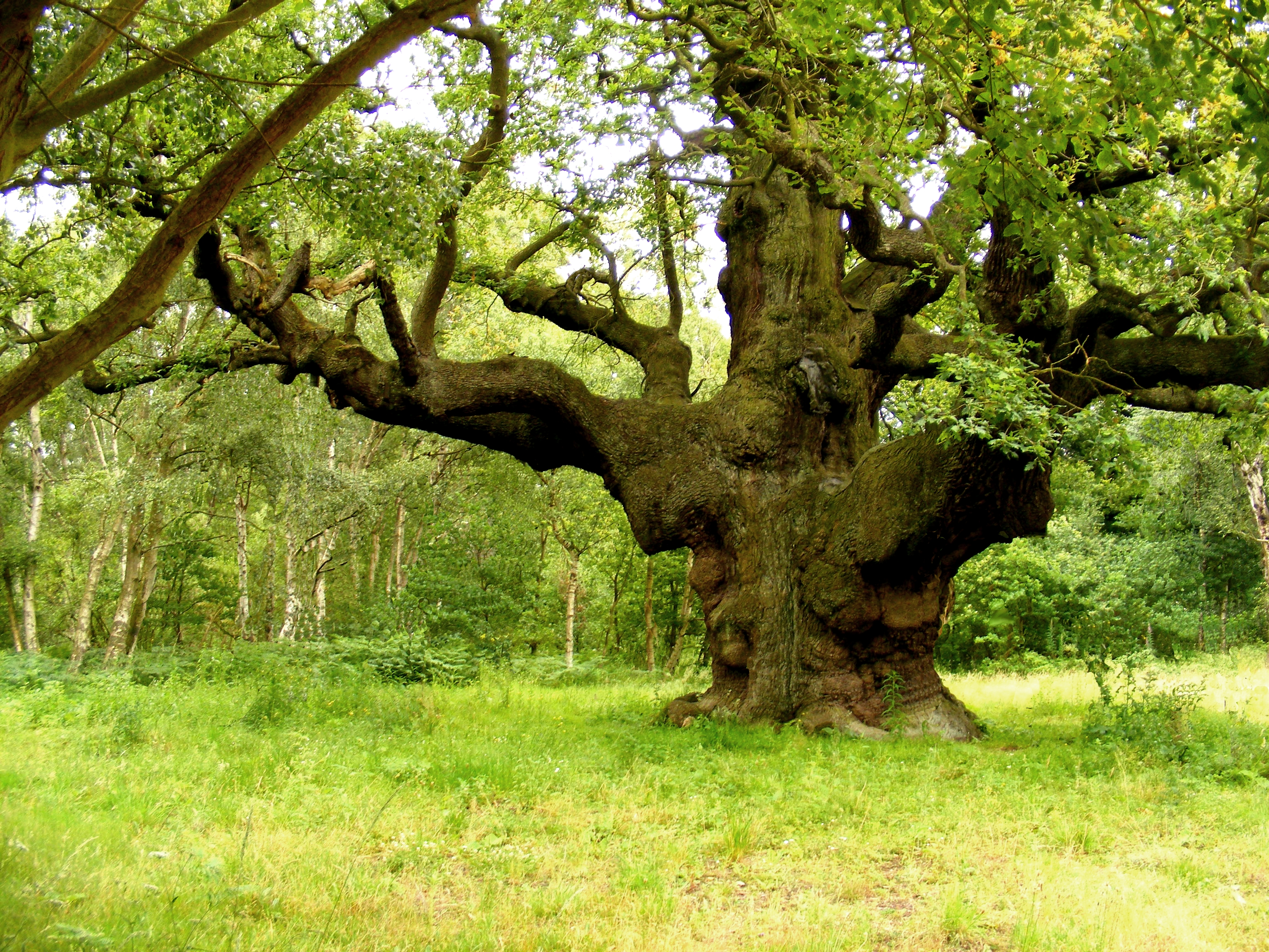5 Of The Most Famous Trees Around The World