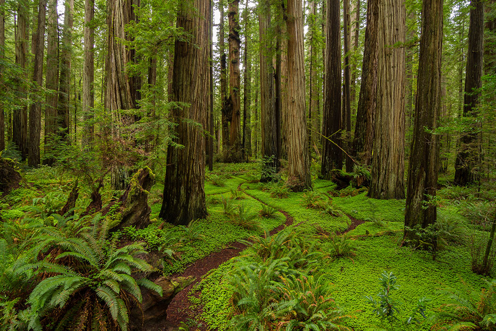 Discover 5 Of America S Old Growth Forests American Forests