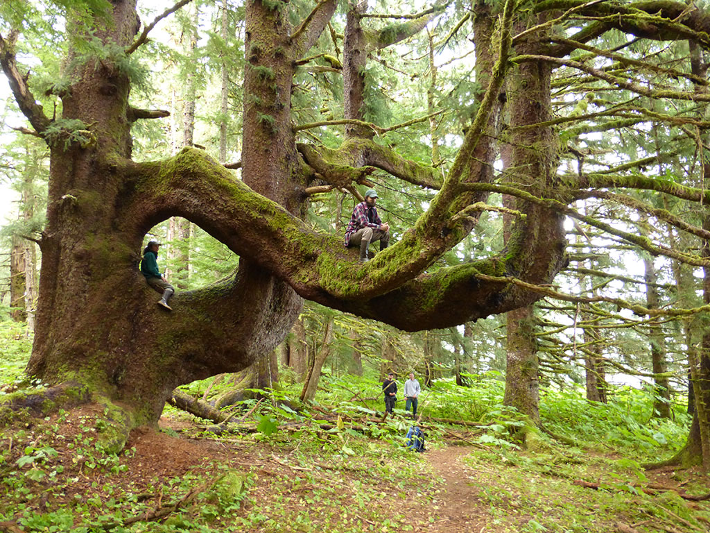 Discover 5 Of Americas Old Growth Forests