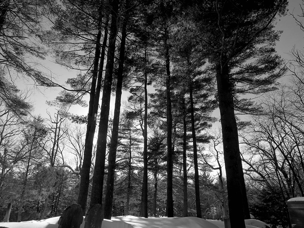 thoreau trees a visceral connection american forests thoreau s grave sleepy hollow cemetery concord