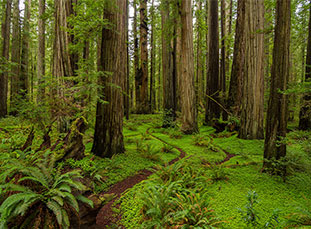 Jedediah Redwoods State Park