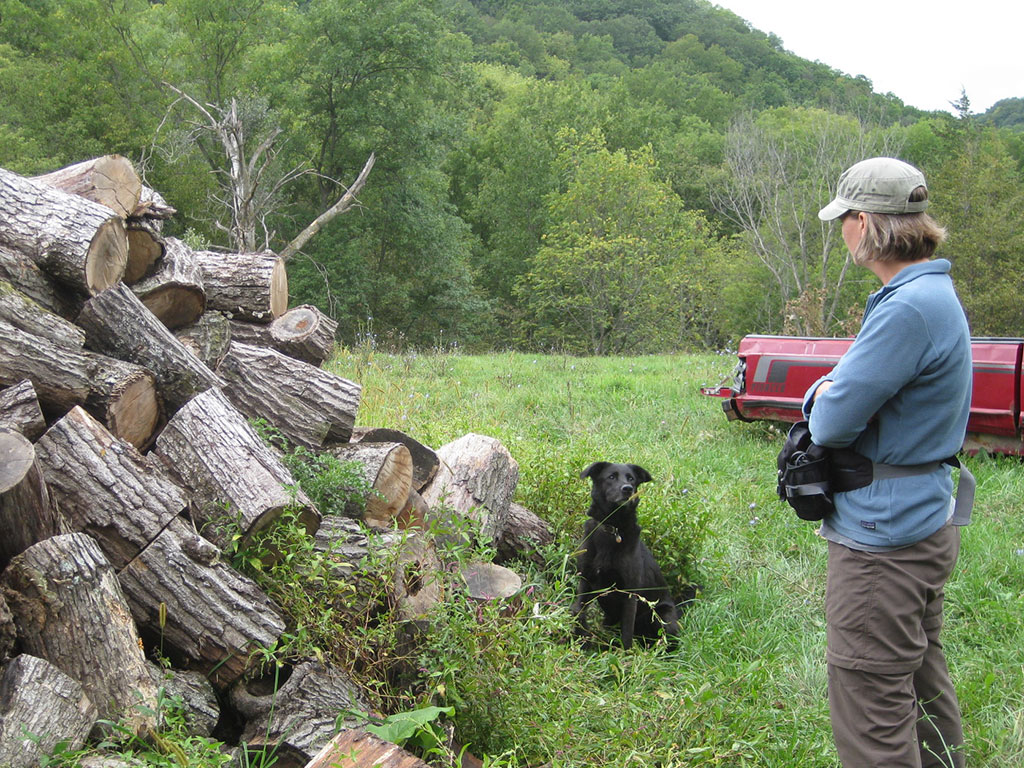 Handler Aimee Hurt looks on as Wicket prepares to search a wood pile