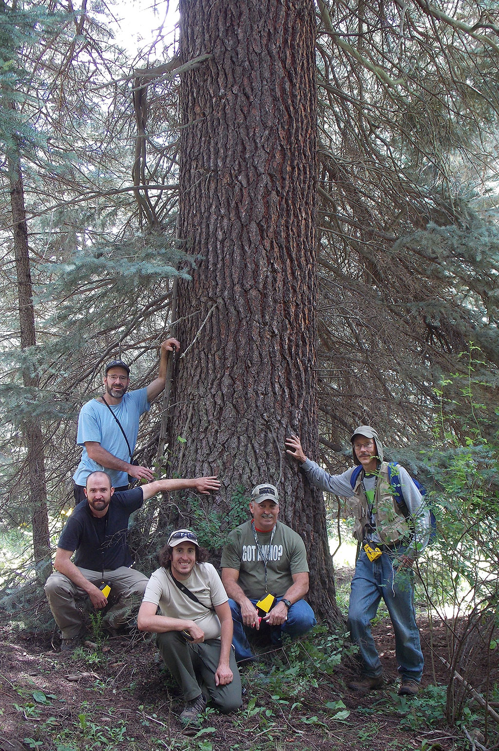 Big Tree Hunting in Colorado: A Case for the Numbers