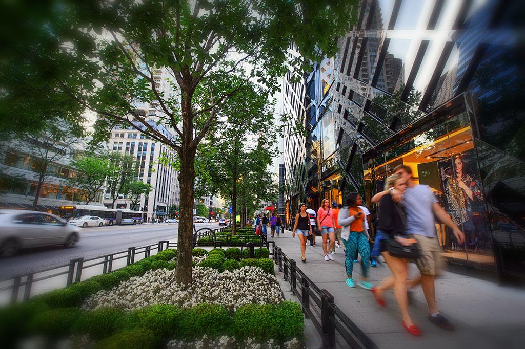People on tree-lined street