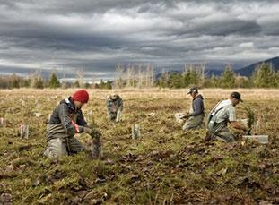 Skagit Restoration Planting