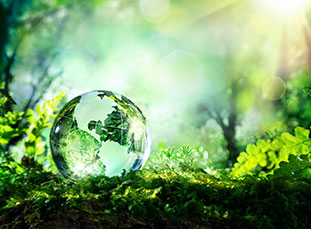 Globe in Forest