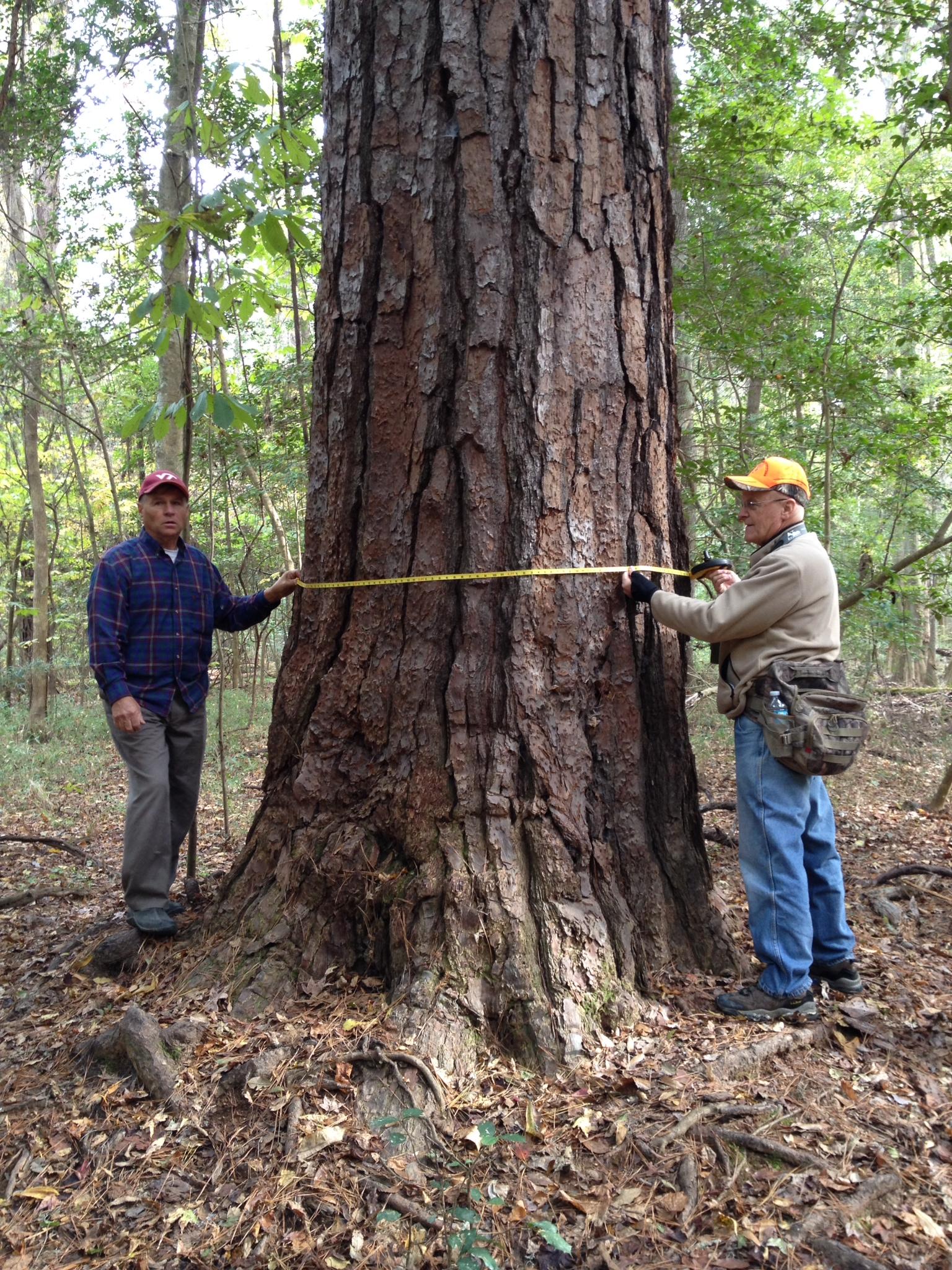 Big tree hunters Byron Carmean and Gary WiIliamson