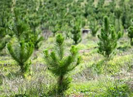 Plant Trees thumb