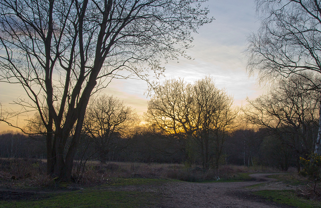 Epping Forest, Essex, England.