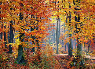 Fall Color Gallery