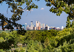 Minneapolis urban forest - photo credit Chuck Fazio