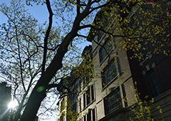 energy-saving street trees