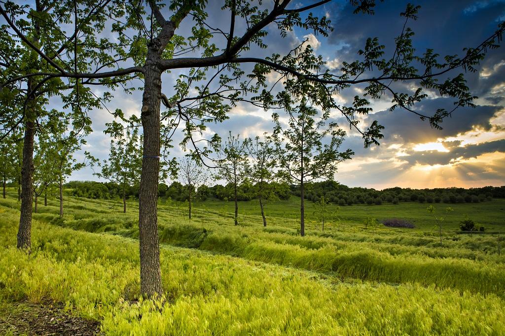 Agroforestry in Missouri.
