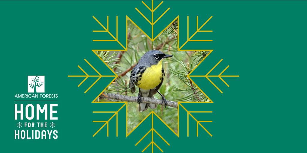 fb-twitter_af_home-for-holidays_kirtlands-warbler_gold